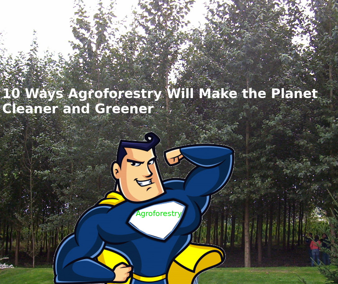 environmental benefits of agroforestry