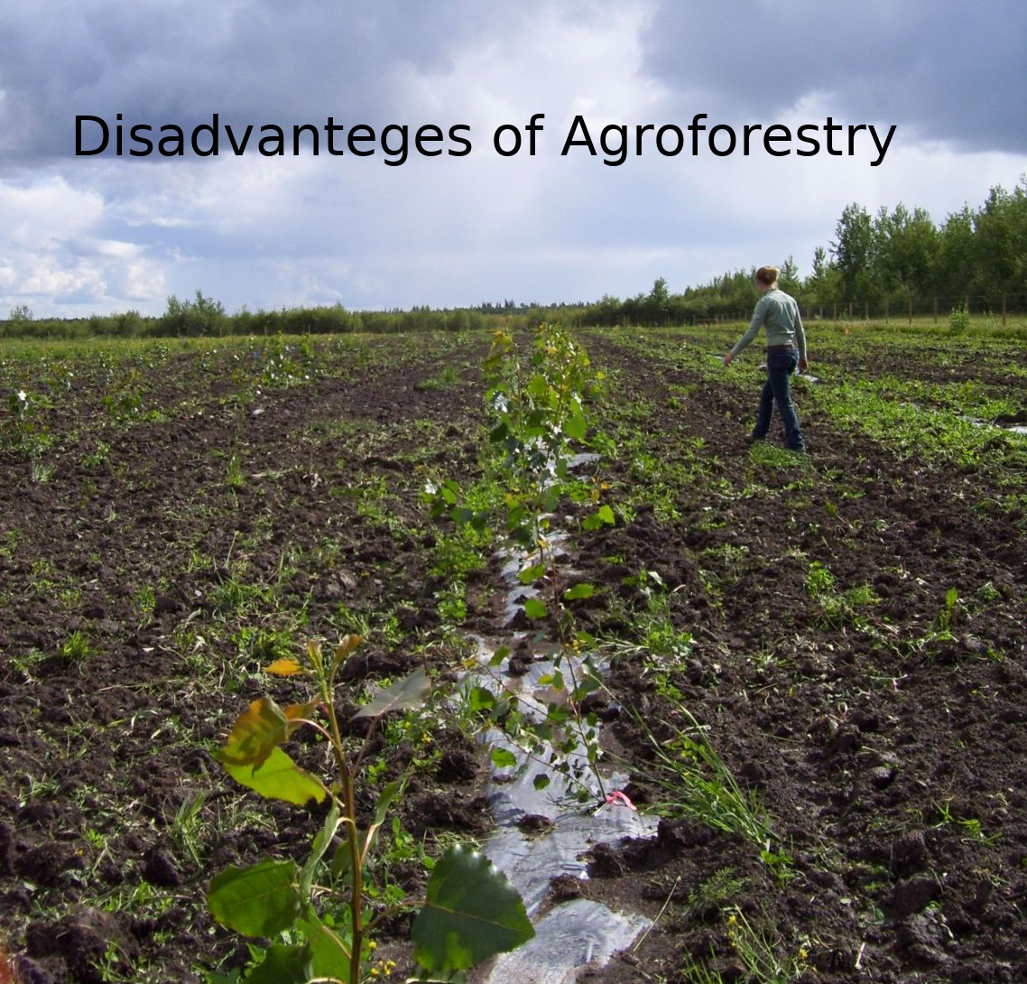 Agroforestry Planting